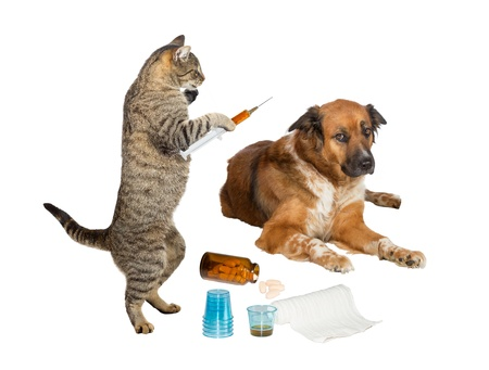 Humorous image of a veterinarian cat holding a syringe, treating a sick dog looking distrustful, isolated on white photo