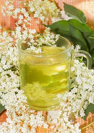Herbal infusion or tea of Elder or Sambucus blossoms, used by coughts to aid diaphoretic  photo