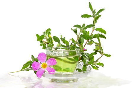 Glass of refreshing tea or infusion made from the Rockrose or Cistus albidus with a single pink flower and branch of leaves off the shrub alongside, on white Stock Photo
