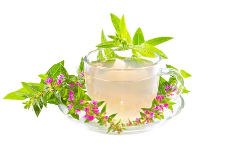 diarrhoea: Clear cup containing an infusion or herbal tea made from the Purple lythrum plant, or Lythrum salicaria, a healing herb used as a cure for diarrhoea and dysentry, isolated on white