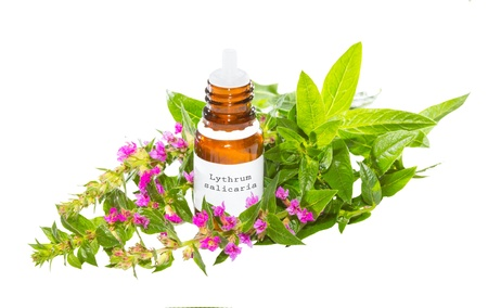 dysentery: Brown bottle with a dropper top containing essential oil or natural plant extracts from the Lythrum salicaria plant, a healing herb used as a cure for diarrhoea and dysentry, isolated on white Stock Photo
