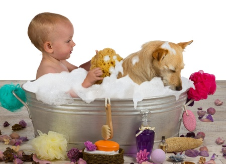 Cute little blond girl having fun bathing with her dog in a metal bathtub filled with soapy bubbles as she lovingly rinses the golden jack russel terrier off with a sponge photo