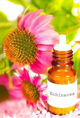 stimulate: Detail of a purple echinacea flower, or Echinacea purpurea, with a brown glass dropper bottle with a typed label of essential oil used in alternative medicine to stimulate the immune system
