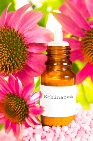 stimulate: Purple echinacea flowers, or Echinacea purpurea, with a brown glass dropper bottle with a typed label of plant extract or essential oil used in alternative medicine to stimulate the immune system Stock Photo