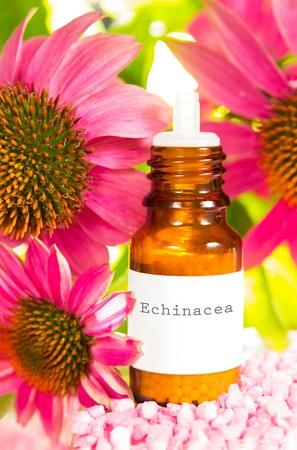 echinacea purpurea: Viola echinacea fiori, o Echinacea purpurea, con una bottiglia di vetro scuro con contagocce, etichetta dattiloscritta di estratto vegetale o olio essenziale utilizzato nella medicina alternativa per stimolare il sistema immunitario