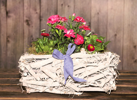 gillyflower: Gillyflowers and Daisies in a white, wooden Basket, with wooden background, for decoration. Stock Photo