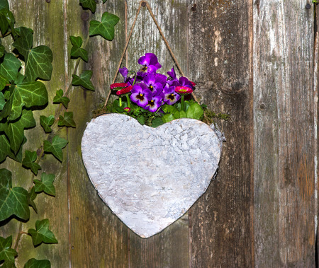 heard: Lovely Pansies planted in a heard on a urban wooden background for garden decoration. Stock Photo