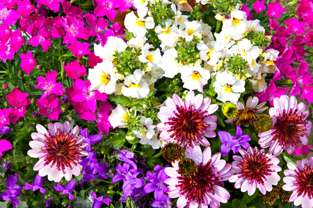 daisys: Closeup of vibrant blossoms of different colorful garden flowers.