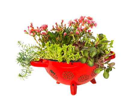 antik: Stonecrop plants planted in a old kitchen sive a very creative and docorative work. Stock Photo
