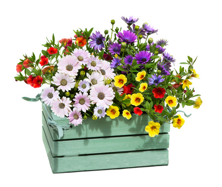 A wooden box with garden flowers with oppulent blossoms.