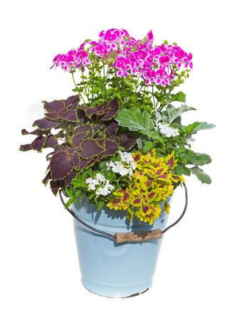 plant in pot: Serveral garden flowers like painted nettle in a old enamel bucket for vintage garden decoration.
