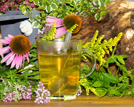 Tea or infusion of echinaces and solidago used in alternative medicine for healing. Stock Photo