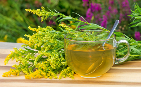 infusion: Cup of infusion of Goldenrot or Solidago a diuretic herbal healing infusion, also used as laxative tea.