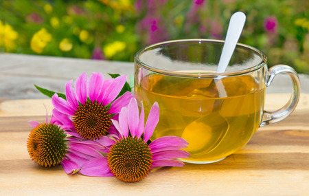 laxative: Cup of herbal tea from echinacea used in alternative medicine a an immun sytem booster.