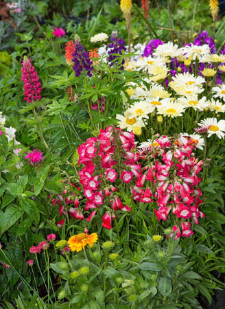 A flower bed with many colorful perennial plants in the garden.