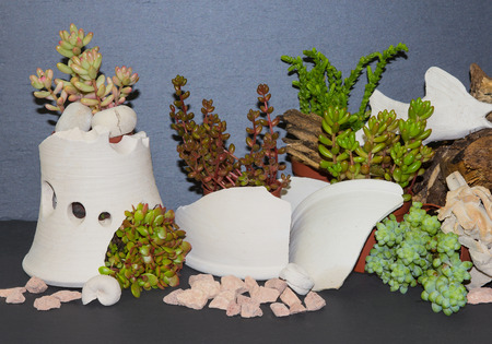earthen pot: Fanciful planted Succulents as an nice indoor decoration.