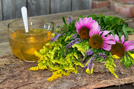 healing plant: Cup of herbal tea or infusion from solidago and echinacea two healing plant for many diseases.