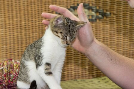 three months old: Three months old kitten enjoys to be stroked from his owner.
