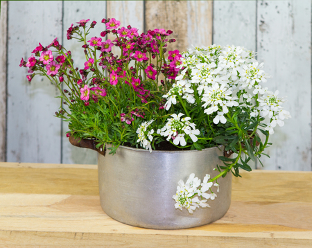 Flowers are planted in a vintage flowerpot as an eyecatcher.