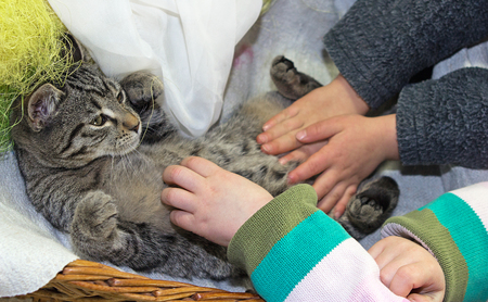 A young cat enjoys to get stroked by tender children hands.