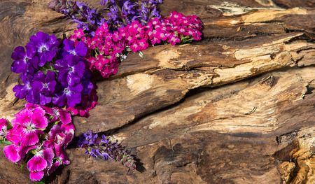 Colorful pin and lilac blossoms on wood with copy space.