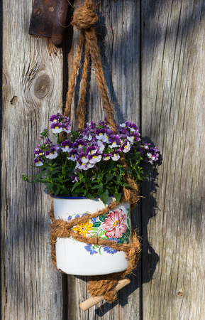 Nemesia, a half-hardy bedding plant in a vintage hanging basket in front of a old wooden door.