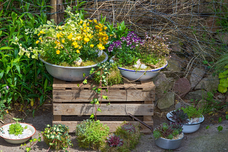 Several perennial plants pottet in old containers a great cottage garden decorattion.
