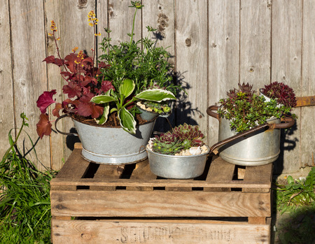 Several perennial plants, plantet in vintage kitchen utensils like old cooking pots and tins.