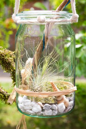 Tillandsia argentea, een luchtplant, decoratief geplaatst in een pot.