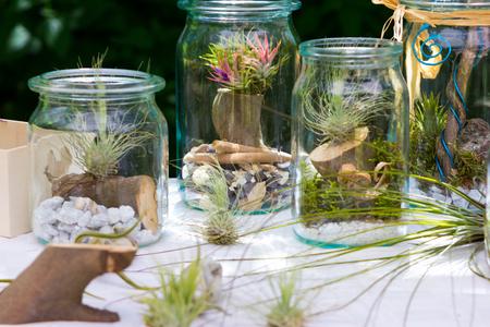Tillandsia ionantha and tillandsia argentea in a decorative jar. Stock Photo