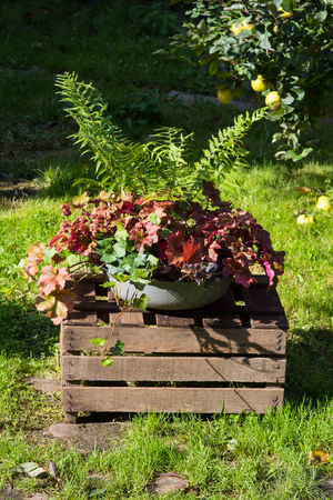 Perennial autum plants in a old washbowl, decorative chabby chic style.