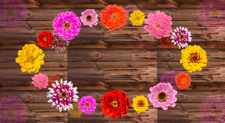 Colorful Zinia blossoms on wood in a circle, with copy space.