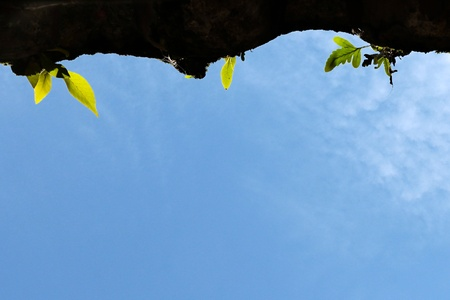 green fern growing on dirty roof tile with blue sky  background photo