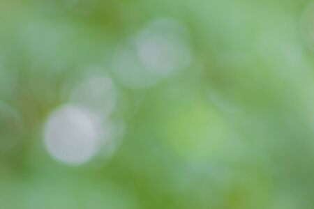 traquil scene: beautiful bokeh and blur colorful  background