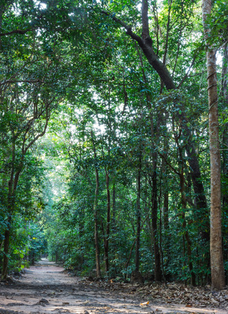 beautiful tropical green Forest and walkway