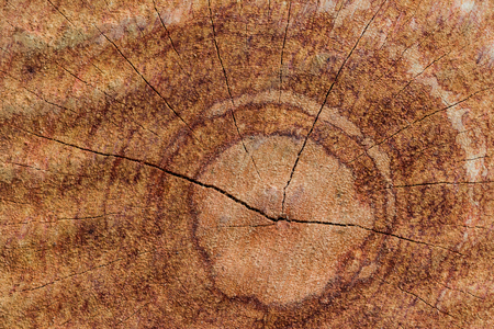 cross section: brown color tree trunk  wood cross section Stock Photo