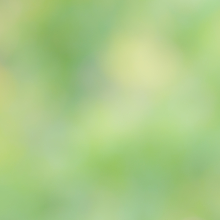 traquil scene: beautiful  blur natural forest  background in yellow and green