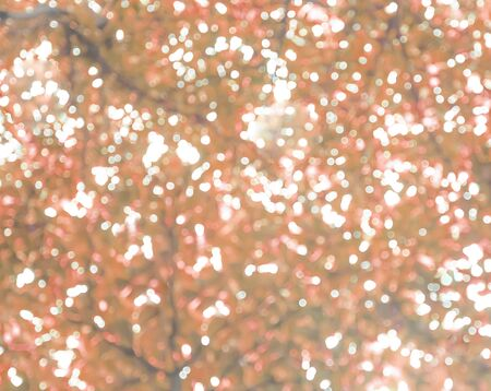 Beautiful and natural brown bokeh  background Stock Photo