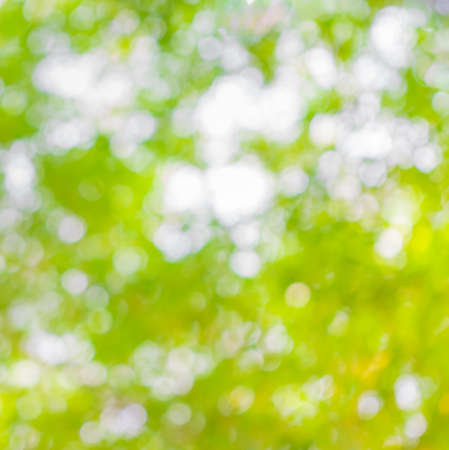 traquil scene: beautiful  blur natural forest leaf background in yellow and green