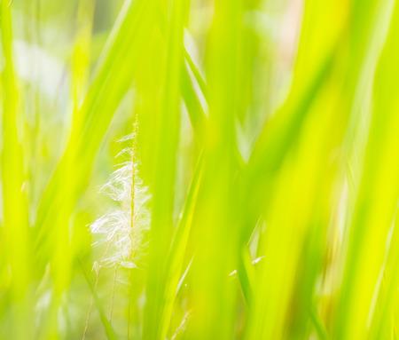 Schneeglöckchen Im Gras Hof Lizenzfreie Fotos, Bilder Und Stock ...