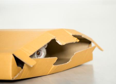 cat or kitten play hide and seek in cardboard box