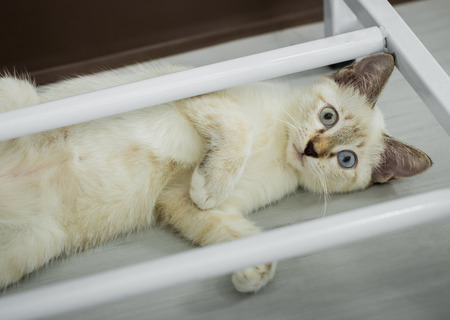 beautiful cute cat or kitten laying down on floor