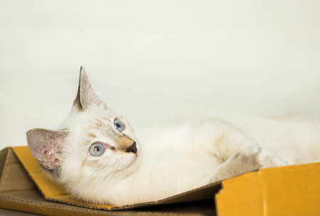 beautiful cute cat or kitten laying down on paper box