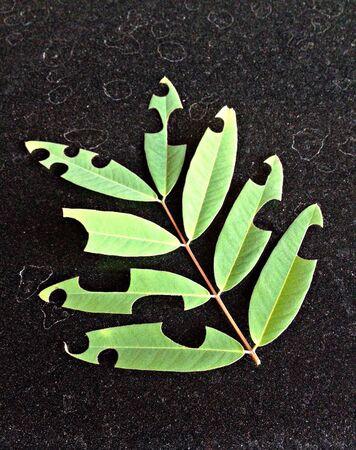 black: Leaf on the black Stock Photo
