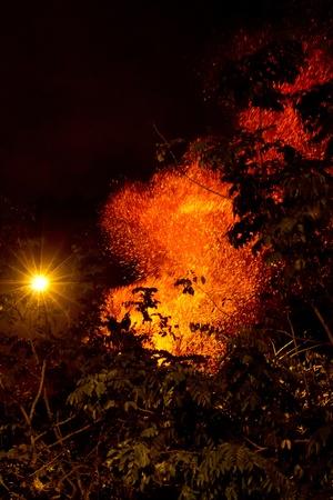 burning bush: Forest fire
