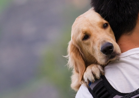holding the head: Dog on a man shoulders Stock Photo