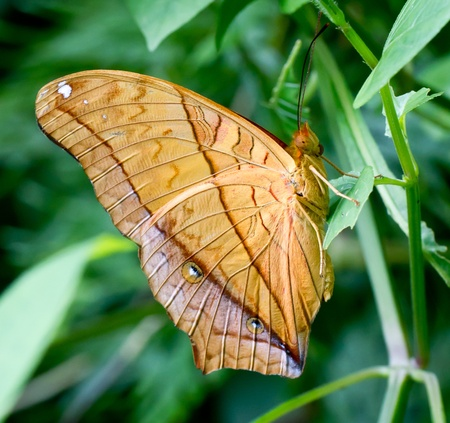 releasing: Beautiful yellow butterfly Stock Photo