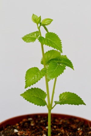 Green plant growing in a pot of soil photo