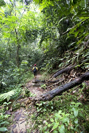 man hiking in a thick rainforest