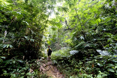 urban jungle: man hiking in a thick rainforest